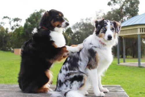 Hunde Dorn Therapie